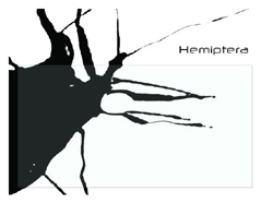 030_hemipterabugs.jpg