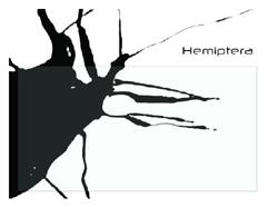 030_hemipterabugs.jpg